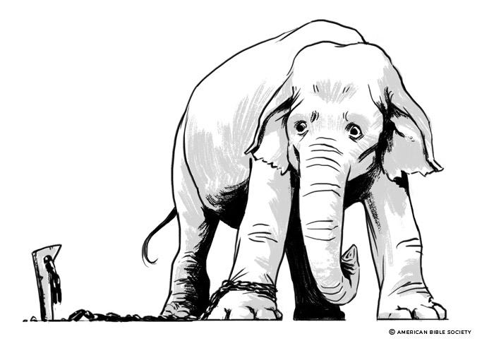 ian_dale_hwt_elephant
