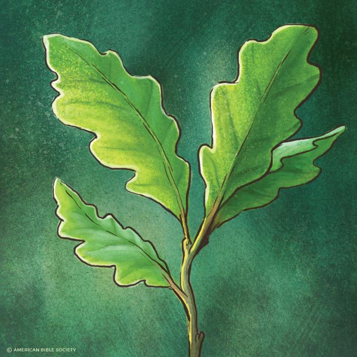 ian_dale_hwt_tree2