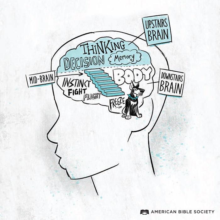 ian_dale_HWT_Teen_Brain